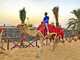 17 trải nghiệm tuyệt vời khi du lịch Dubai