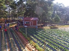 Điểm danh 6 vườn dâu tây trên cao nguyên Mộc Châu